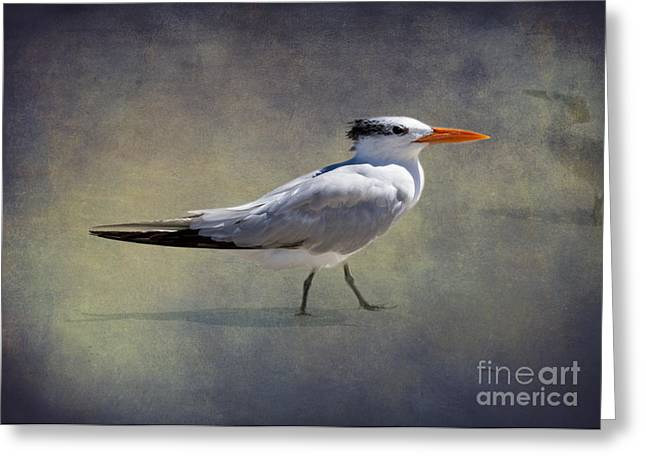 Wall Art Greeting Cards - The Royal Tern by Darrell Hutto Greeting Card by Darrell Hutto