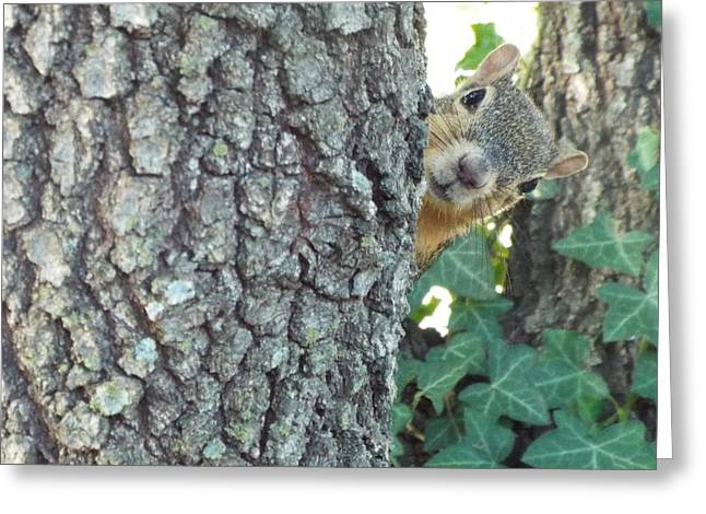 Eastern Fox Squirrel Greeting Cards - The Runaround Greeting Card by Michael Dillon