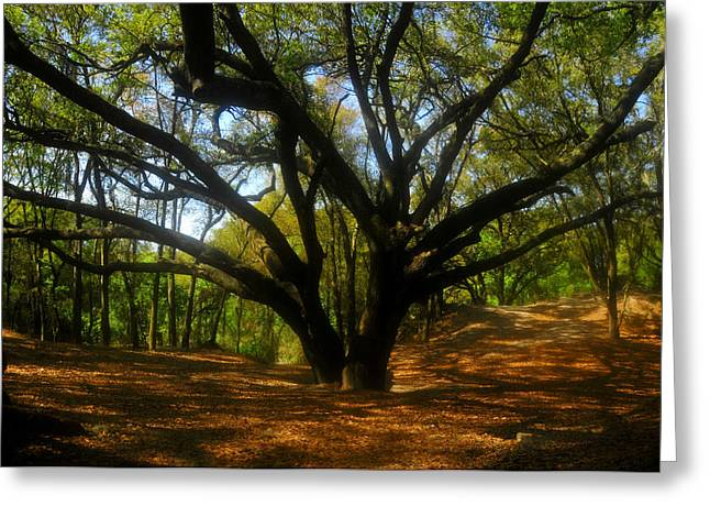 Live Art Greeting Cards - The Sacred Oak Greeting Card by David Lee Thompson