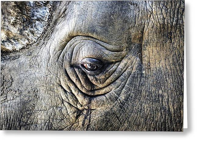 Rhinos Greeting Cards - The sad eye of a rhino Greeting Card by Joana Kruse