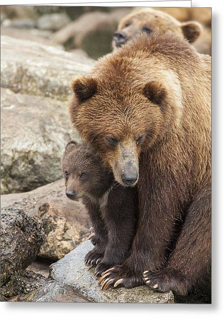 Tongass Greeting Cards - The Safest Place in the World Greeting Card by Tim Grams