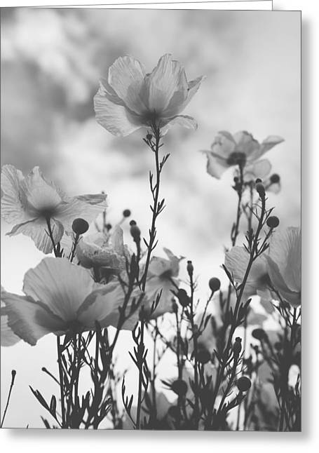 Flowering Trees Greeting Cards - The Same Air You Breathe Greeting Card by Laurie Search