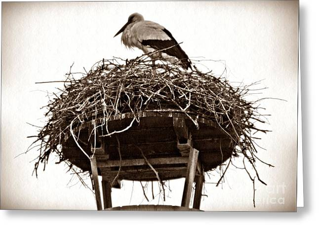 Stork Greeting Cards - The Schierstein Stork Sepia Greeting Card by Sarah Loft