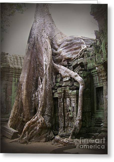 Tree Roots Greeting Cards - The Secrets of Angkor Greeting Card by Eena Bo