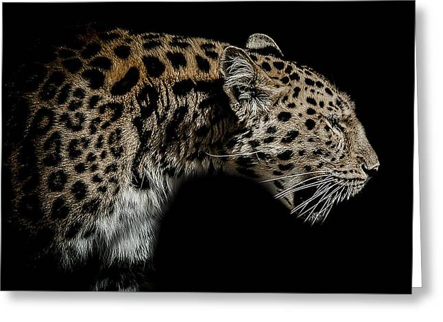 Amur Greeting Cards - The seeker Greeting Card by Paul Neville