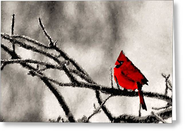 Cardinalis Greeting Cards - The Sentinel Greeting Card by Kristin Elmquist