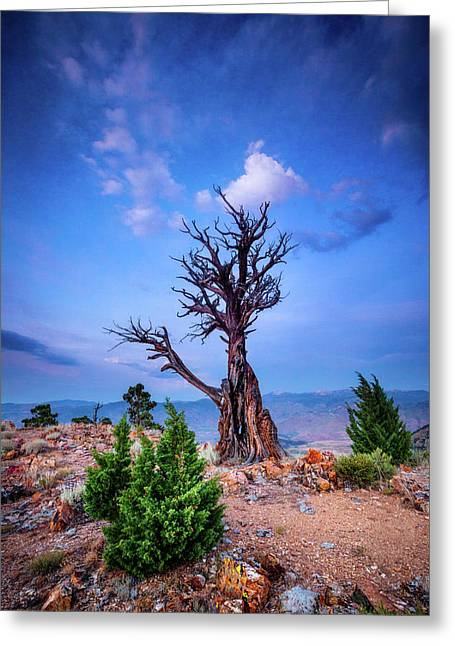 The Sentinel Still Stands Greeting Card by Dan Holmes