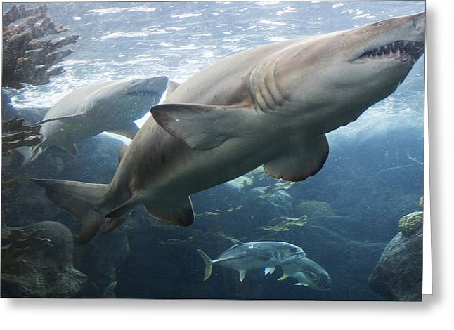 Tim Michael Greeting Cards - The Shark King Greeting Card by Tim Michael Ufferman
