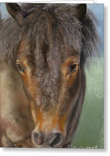 Pony Pastels Greeting Cards - The Shetland Pony Greeting Card by Sabina Haas