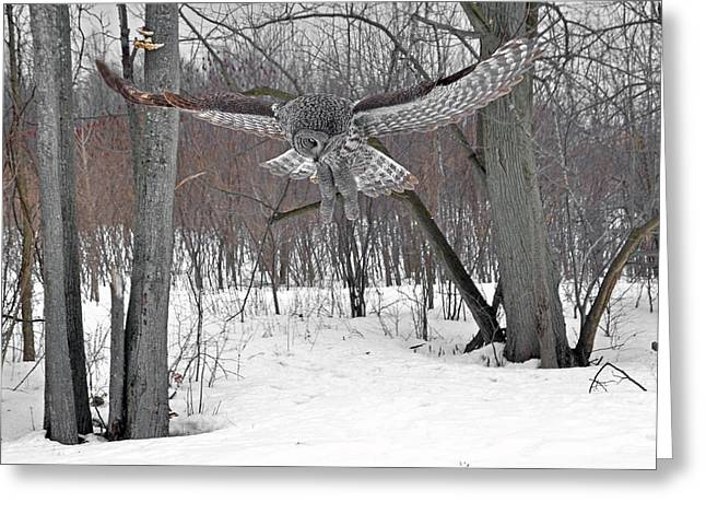 Saw Greeting Cards - The silent hunter Greeting Card by Asbed Iskedjian