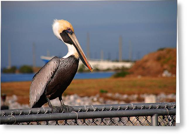 Photos Of Birds Greeting Cards - The single guy Greeting Card by Susanne Van Hulst