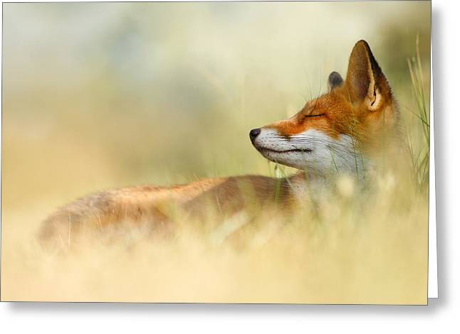 The Sleeping Beauty - Wild Red Fox Greeting Card by Roeselien Raimond