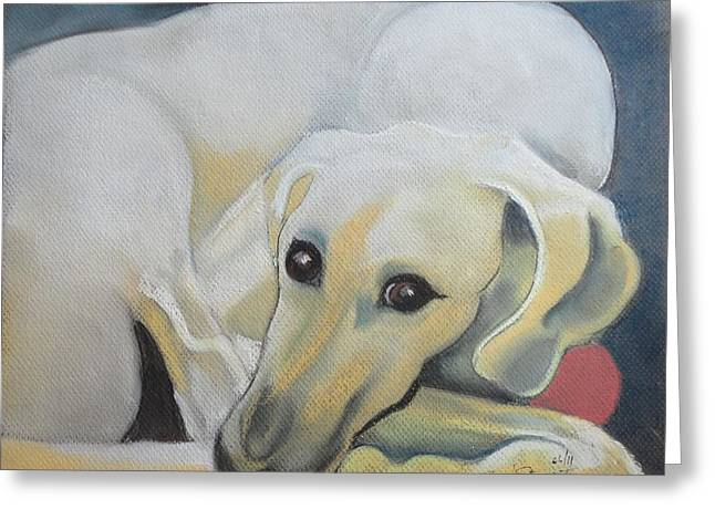 The North Pastels Greeting Cards - The Sloughi Sighthound Greeting Card by Beryl Stewart