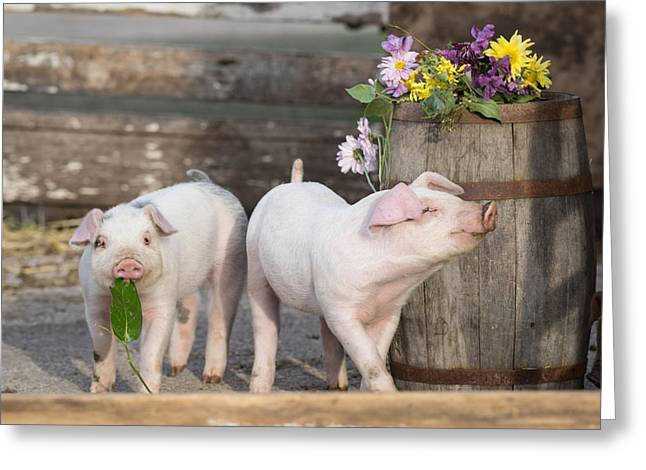Piglets Greeting Cards - The Smells of Spring Greeting Card by Lorianne Ende