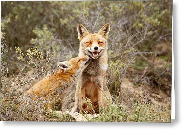 Red Fox Pup Greeting Cards - The Smiling Vixen and the Happy Kit Greeting Card by Roeselien Raimond