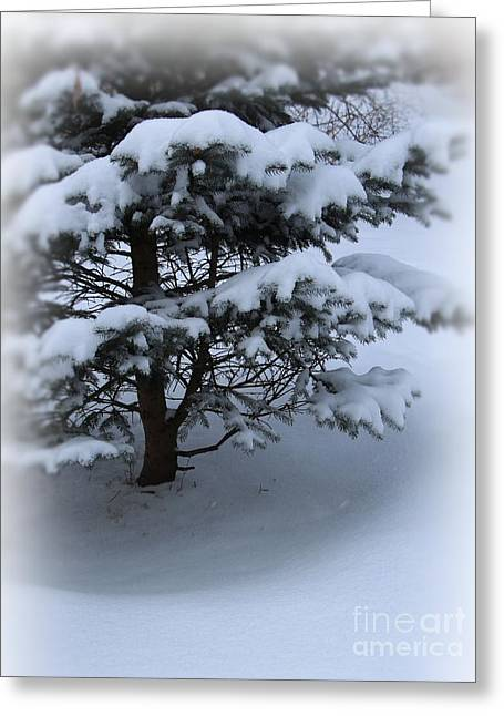 Wintry Greeting Cards - The Softness of Winter Greeting Card by Jari Hawk