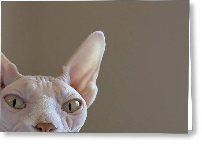 Sphynx Cat Portrait Greeting Cards - The Sphynx Greeting Card by Glennis Siverson