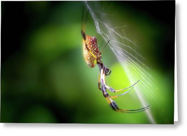 The Spider In The Forest Greeting Card by Mark Andrew Thomas