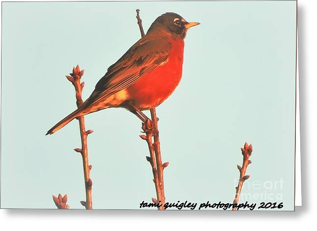 The Spring Seeker Greeting Card by Tami Quigley