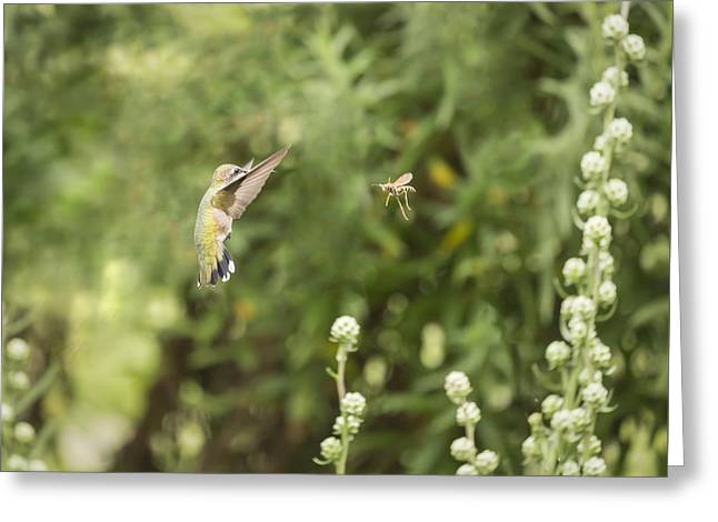 Hovering Greeting Cards - Face Off Greeting Card by Thomas Young