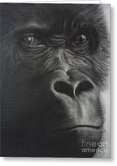 Gorilla Drawings Greeting Cards - The Stare Greeting Card by Paul Horton