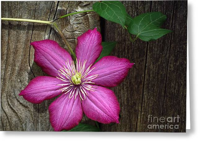 The Still Life Of A Flower 2 Greeting Card by Diane M Dittus