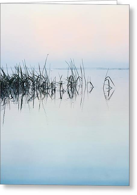 Mist On Lake Greeting Cards - The Stillness of Life Greeting Card by Shelby  Young