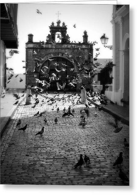 The Street Pigeons Greeting Card by Perry Webster