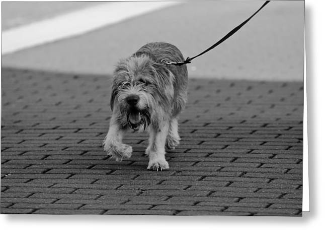 Best Sellers -  - Crosswalk Greeting Cards - The Strut Greeting Card by Edward Myers