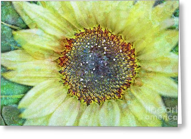 Textured Floral Greeting Cards - The Sunflower Greeting Card by Tara Turner