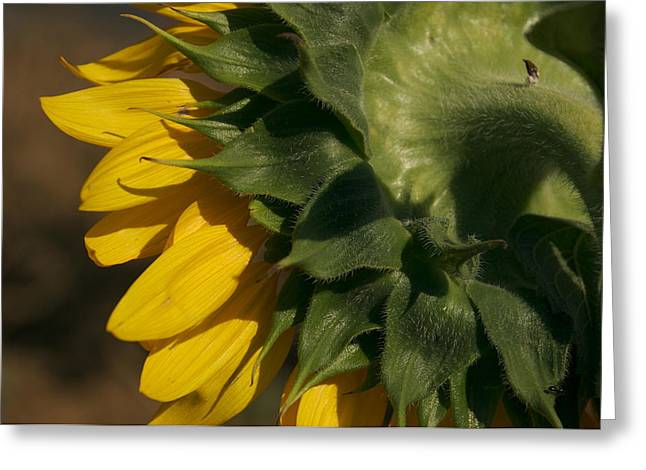 Montepulciano Greeting Cards - The Sunflowers Layers Greeting Card by Heather Perry