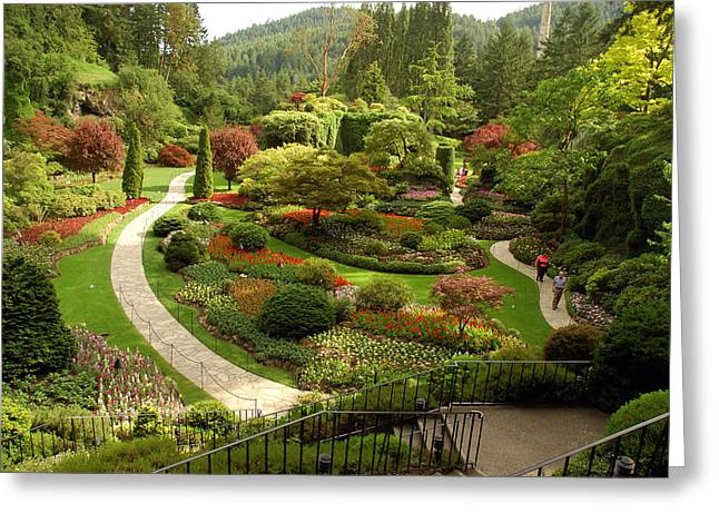 Image Setting Greeting Cards - The Sunken Garden At Butchart Gardnes Greeting Card by Darlyne A. Murawski
