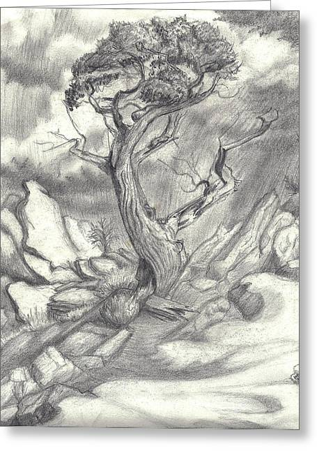 Gnarled Drawings Greeting Cards - The Survivor Greeting Card by Dawn Senior-Trask