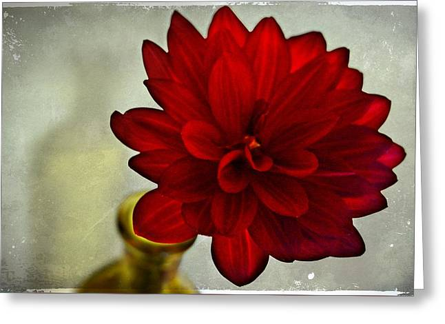 Glass Vase Greeting Cards - The Sweetest Of Shadows Appear Greeting Card by CJ Anderson