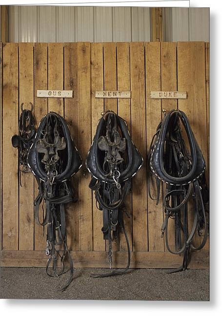 Steamboat Springs Western Greeting Cards - The Tack Room At The Saddleback Ranch Greeting Card by Taylor S. Kennedy