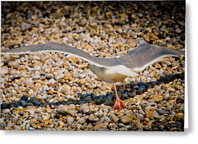 Beach Photography Greeting Cards - The Takeoff Greeting Card by Loriental Photography