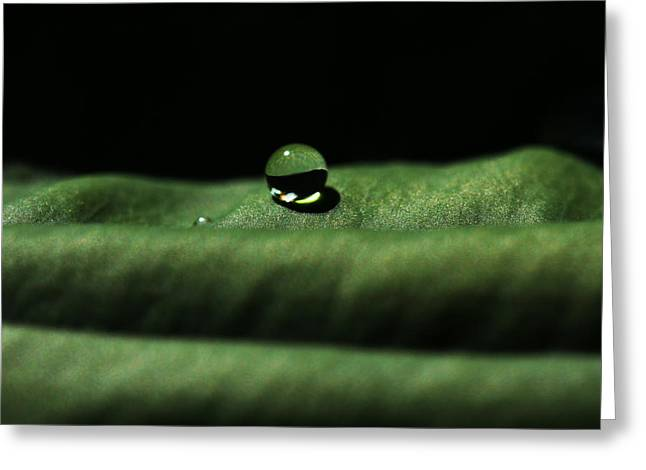 The Tao Of Raindrop Greeting Card by Connie Handscomb