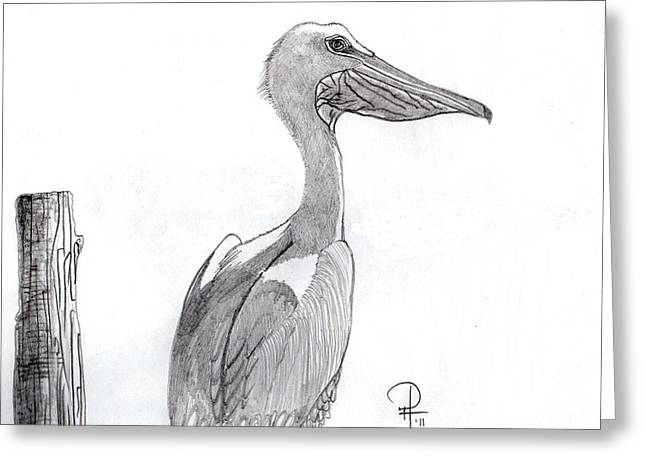 The Teenage Pelican Greeting Card by Doug Hiser
