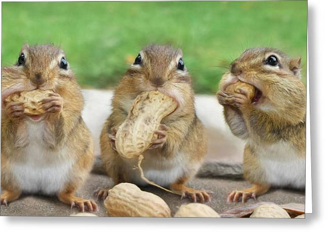 Critter Greeting Cards - The Three Stooges Greeting Card by Lori Deiter