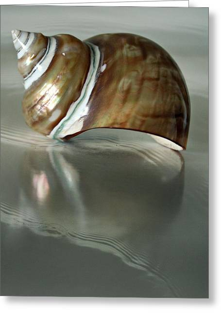 Beach Photography Greeting Cards - The Tide Brought Me To You Greeting Card by CJ Anderson