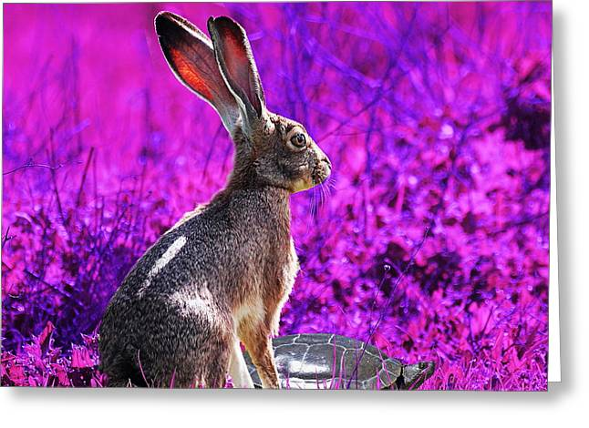 The Tortoise and the Hare . Magenta Square Greeting Card by Wingsdomain Art and Photography