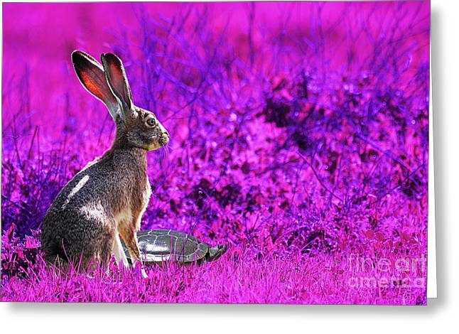 The Tortoise and the Hare . Magenta Greeting Card by Wingsdomain Art and Photography