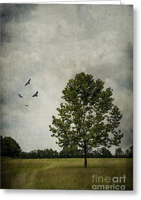 Layers Greeting Cards - The Tree Greeting Card by Debra Fedchin