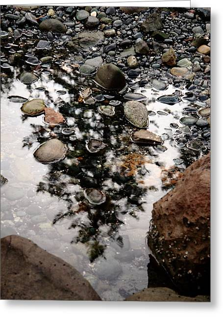 Rocks Greeting Cards - The Tree In The Puddle At My Feet Greeting Card by Kreddible Trout