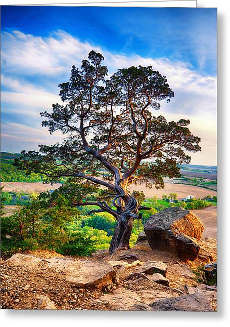 Hdr Look Greeting Cards - The tree Greeting Card by Keith Homan