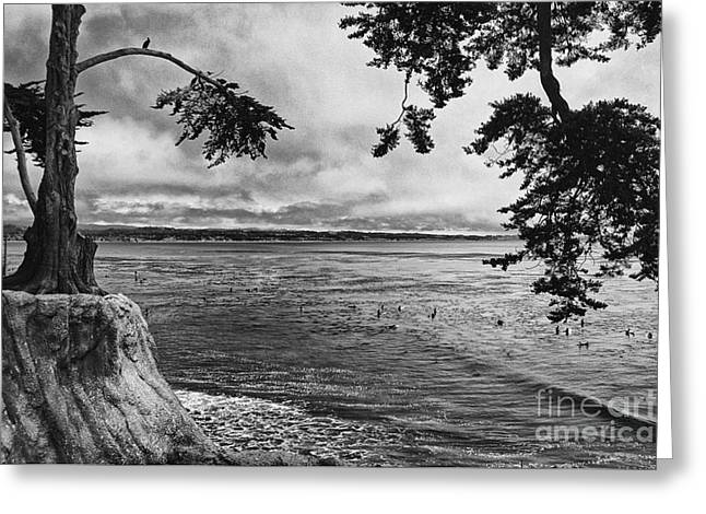 Santa Cruz Greeting Cards - The Trees Of Pleasure Point  Greeting Card by Chris Berry