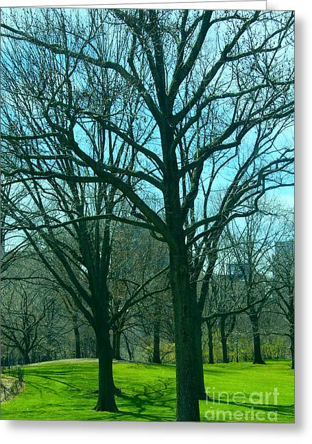 The Trees Greeting Card by Terry Wallace