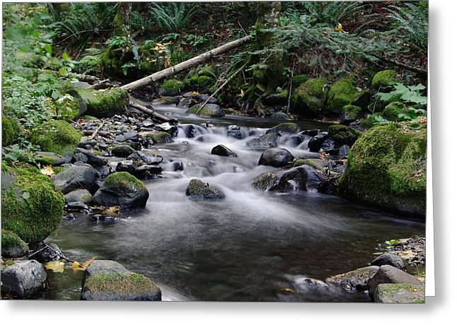 Moss Green Greeting Cards - The trickling sounds in paradise Greeting Card by Jeff  Swan