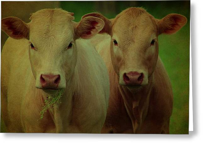 Farm Life Framed Prints Greeting Cards - The Twins Greeting Card by Beth Wiseman