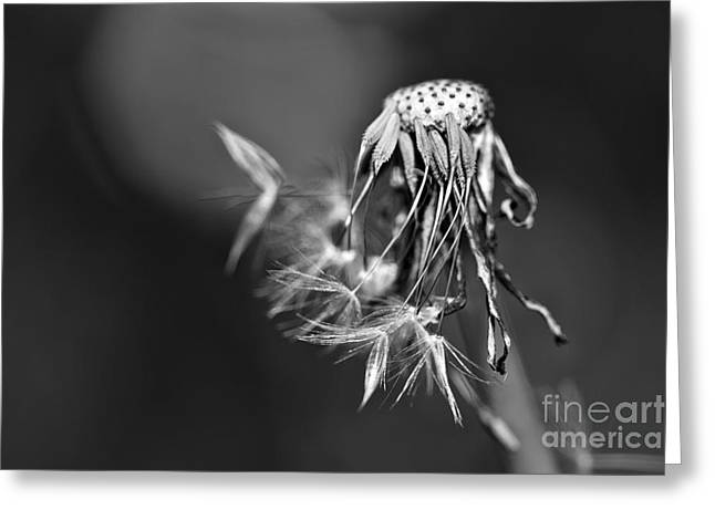 The Underrated Dandelion 1 Greeting Card by Natalie Kinnear